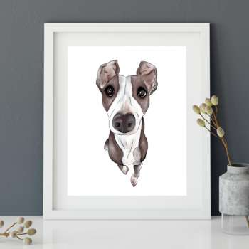Jet the Whippet